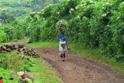 Reisegedicht statt Reisebericht Die Perle Afrikas