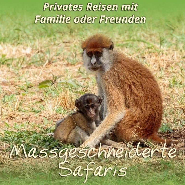 Private Safaris & Maßgeschneidert