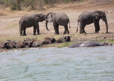 Uganda – Privatreise 5.bis 22. August 2018