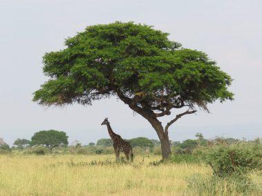 T. & M. D. 14 Tage Gruppenreise Uganda im Juli
