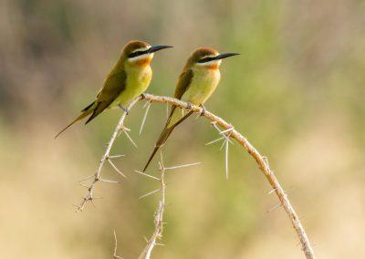Naturlich Uganda