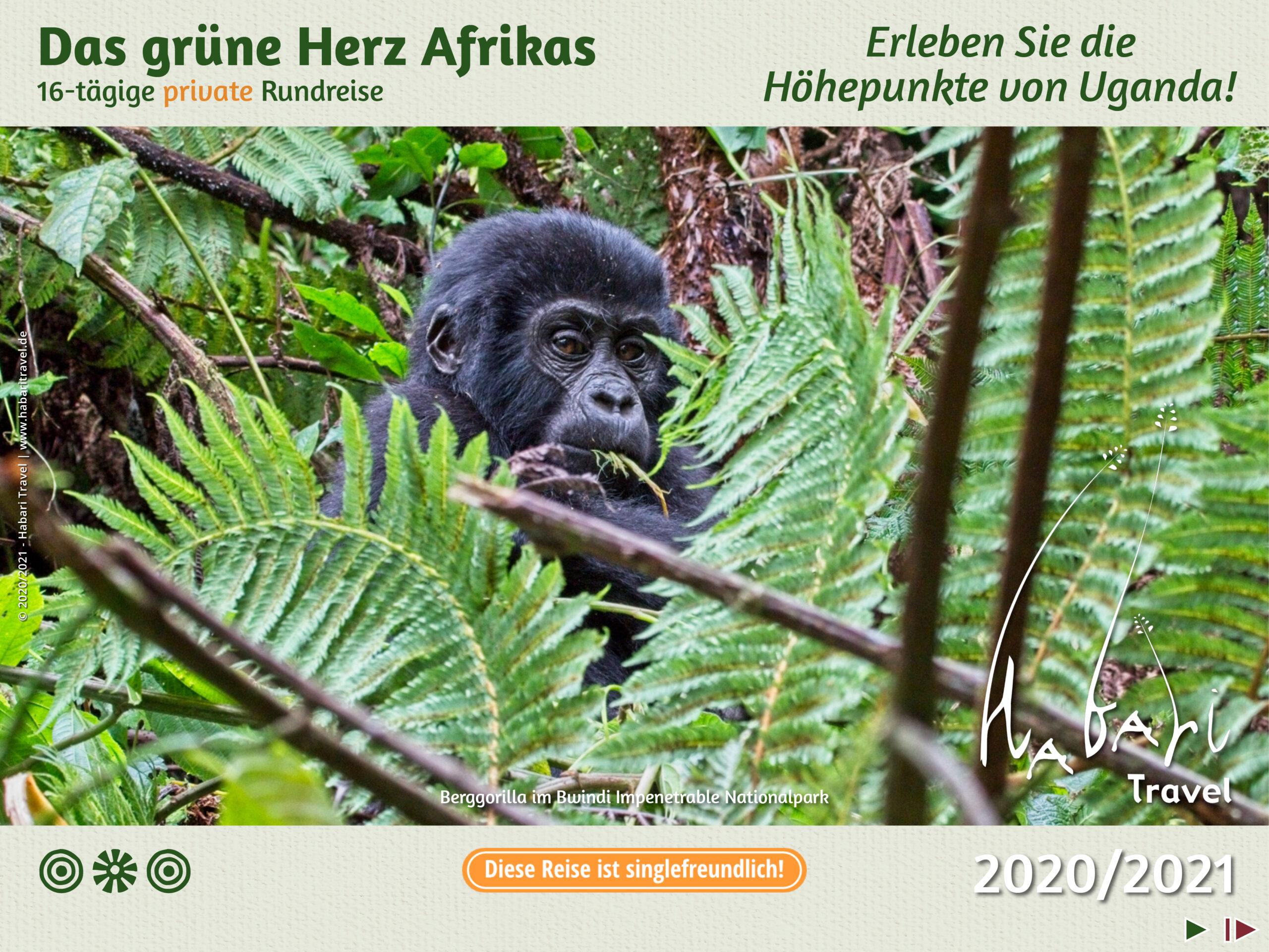 Broschüre Das grune Herz Afrikas