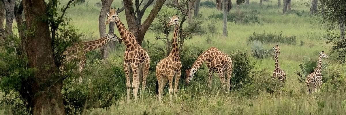 Luxusreise Uganda