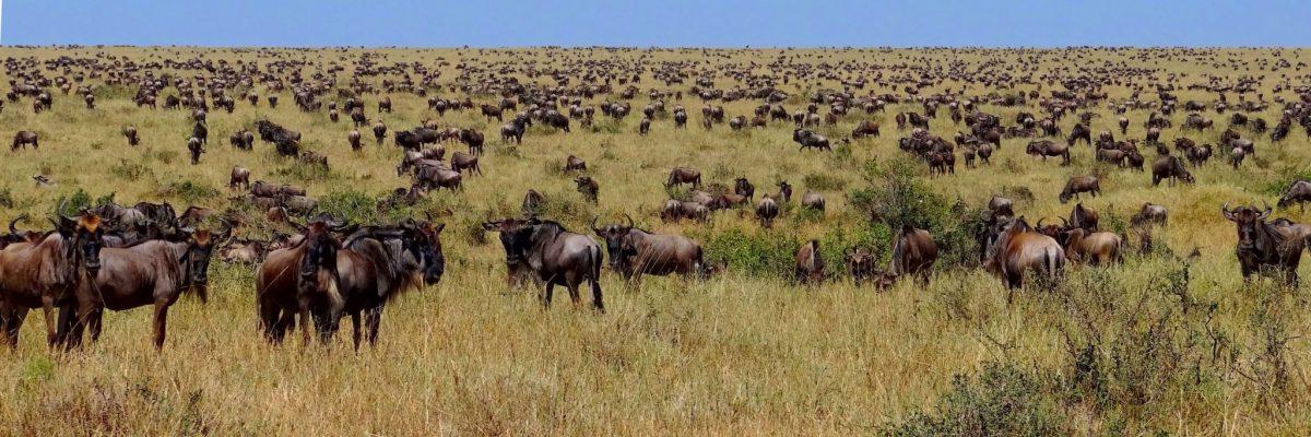 Habari Travel Safarireizen