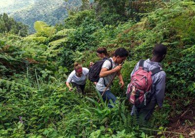 Gorilla Tracking im Bwindi Impenetrable Nationalpark