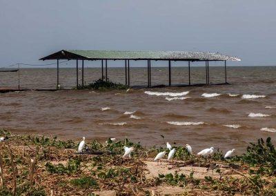 Vögel auf Nahrungssuche am Ufer des Viktoriasees