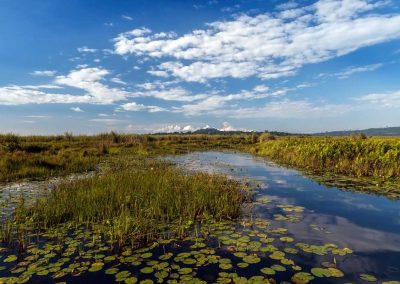 Morgendliche Bootsfahrt durch den Mabamba Swamp