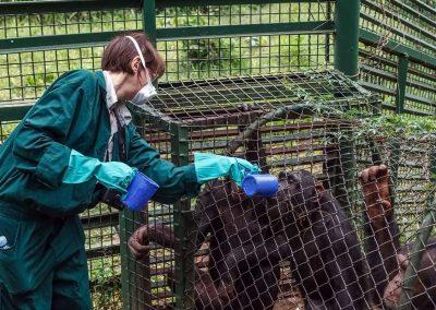 """Im Entebbe Zoo können Sie als """"Pflager für einen Tag"""" arbeiten (muss im Voraus gebucht werden)"""