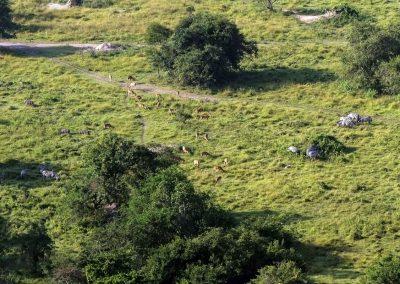 Blick vom Mburo Eagles Nest auf die grasenden Tiere