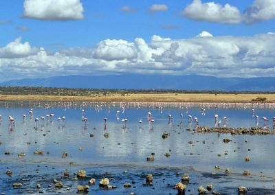Am Lake Magadi