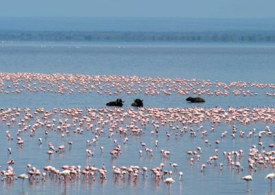 Am Lake Manyara