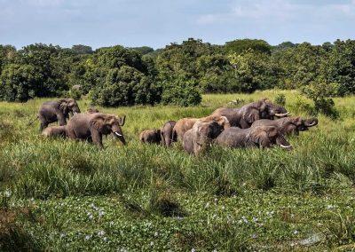 Während der Bootsfahrt zu den Murchison Wasserfällen sieht man oft Savannenelefanten