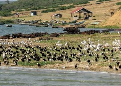 Am Ufer des Kazinga Kanals ist immer viel los