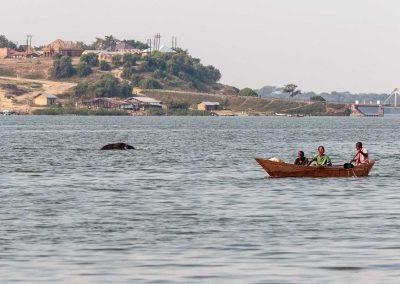 In der Nähe der Bush Lodge durchquert ein Savannenelefant den Kazinga Kanal