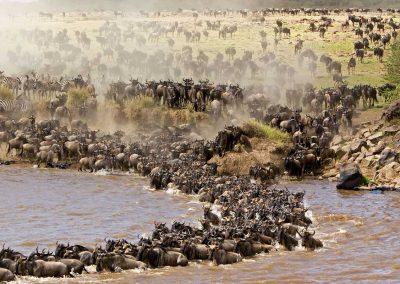 uberblick 2 wildebeest migration quer durch ostafrika