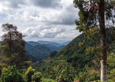 Bwindi Impenetrable Nationalpark