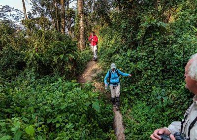 uberblick-3-gorilla-tracking-in-bwindi-die-perle-afrikas